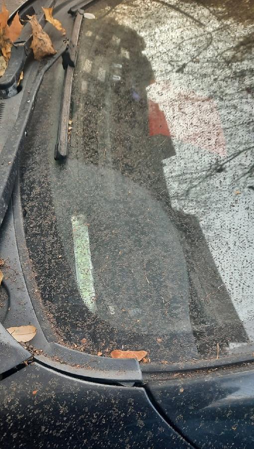 Работники ЖКС на проспекте Славы у дома 2 к1, раздували осеннюю листву и вот результат