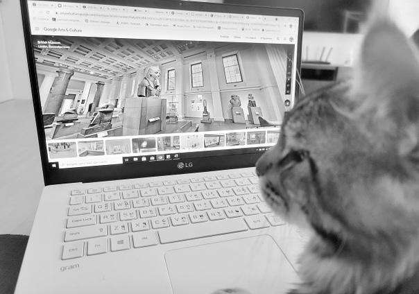 Онлайн-экскурсия с котом