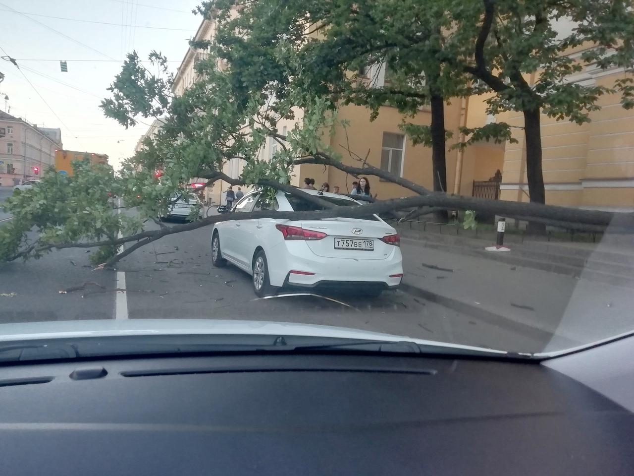 На Садовой 50 на припаркованный Hyundai упало дерево.