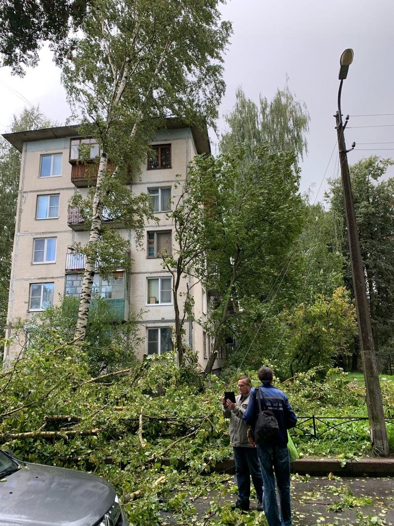 Дерево упало на Шкоду от ветра с дождём, на улице Ольги Форш у дома 5