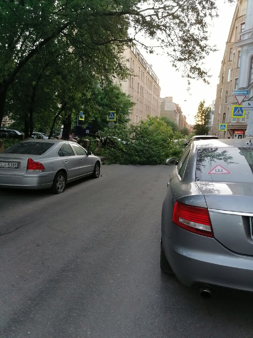 Упало дерево, ветка тонны на 2 потянет - угол Ропшинской и Малого П.С., перекрыло улицу!