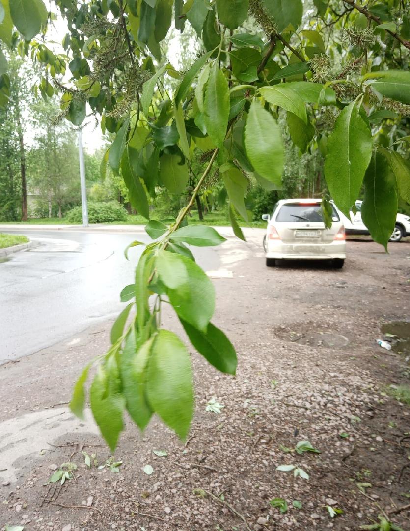 Кто-то хорошо покатался на КИА К5 со 194 л.с., но закончил свой путь в дереве на изгибе дороги.