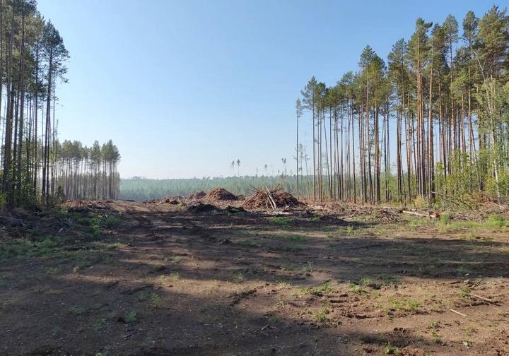 Природоохранная прокурора обязала лесозаготовителей восстановить лес на площади 253 га