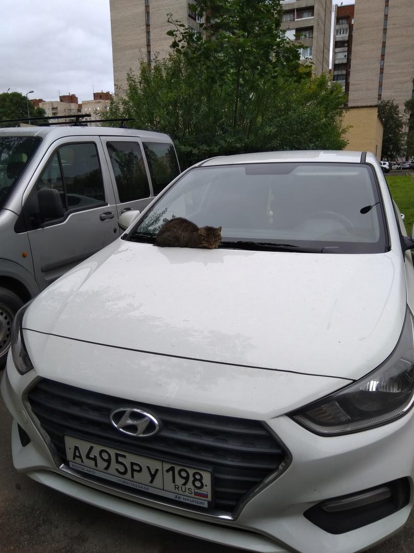 20 мая в 00:06 был угнан автомобиль Hyundai Solaris белого цвета (2018 года выпуска, Госномер А495Р...