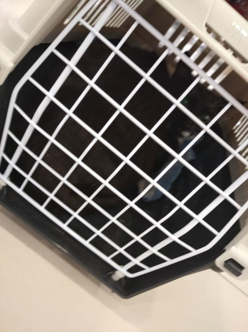 Пару часов назад по словам продавца кота или кошку оставили в Заневском каскаде, у эскалатора. Ребен...