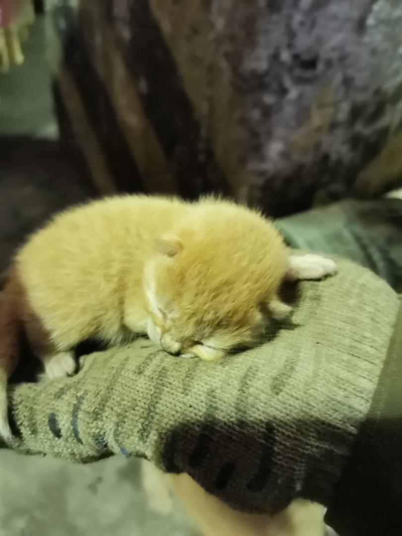 На Энергетиков 19 мамка бросила котят на складе строй хаус, один помер, а двое живы. Им наверное не...