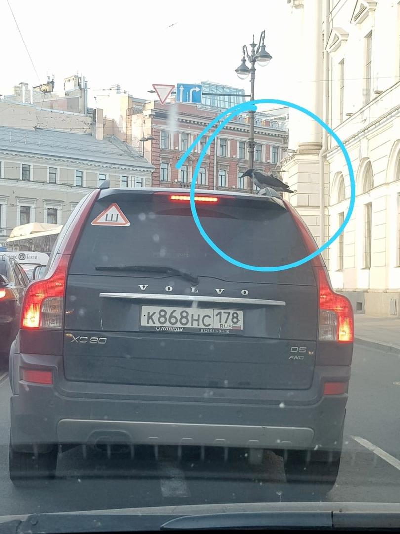 Ворона, чтобы не тратить свои силы, решила прокатиться с ветерком на крыше Volvo.
