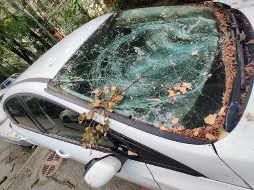 """""""Починили"""" дерево"""" За месяц две машины во дворе уже прибило другими деревьями на Науки 13 к.2. Ждем..."""