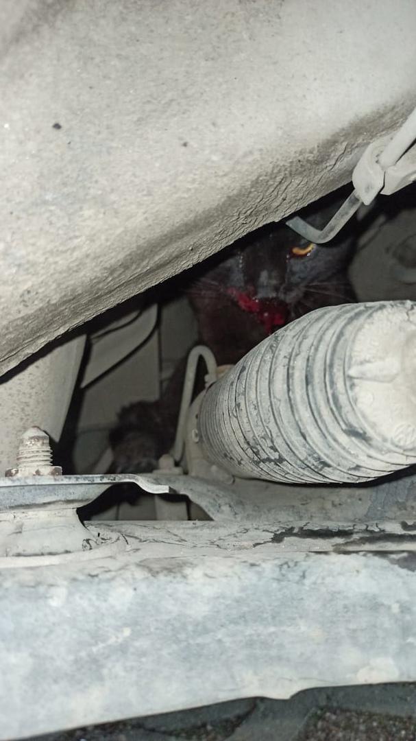 На Хасанской у дома №8 под капотом сидит раненый кот, сбила машина, челюсть набок, лапа сломана. Мне...