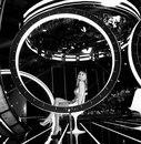 Вера Брежнева фотография #49