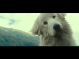«Белль и Себастьян: приключения продолжаются» / тизер-трейлер (HD)