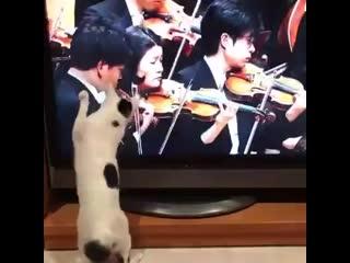 Вот почему котиков не берут в оркестр