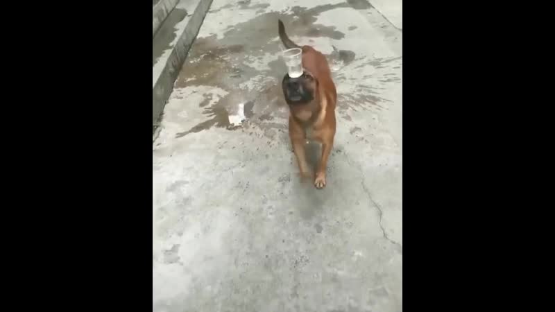 Потрясающая собака · Смотреть оригинал · Оценить перевод