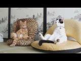 Відео Приколи з Котами!!! Збірка приколів з котами 2014