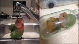 Funny Parrots Videos Compilation cute moment of the animals - Cute Parrots #3