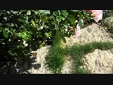 Кэтрин Кэт - Весна ( Премьера песни)_HIGH.mp4