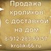 kroliki66.ru - продажа кроликов разных пород