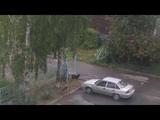 Стая собак в Лукьяново