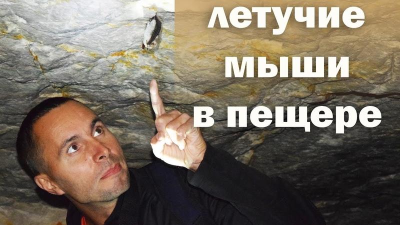 Летучие мыши в Танечкиной пещере