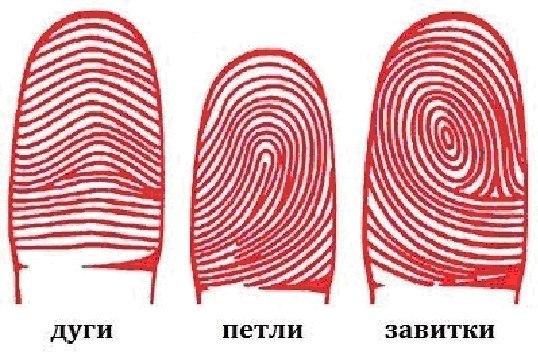 Характер и узоры отпечатков пальцев Если при хорошем освещении внимательно посмотреть на подушечки пальцев, можно увидеть, что линии складываются в строгие узоры. Это могут быть дуги, петли и завитки. 1. ДУГИ Люди с дугами встречаются довольно часто, но обычно такой рисунок расположен всего на двух-трех пальцах (дуги на всех десяти пальцах – очень большая редкость). Для таких людей физический потенциал не главное, у них преобладают психологические, личностные качества. У обладателей «дуг»…