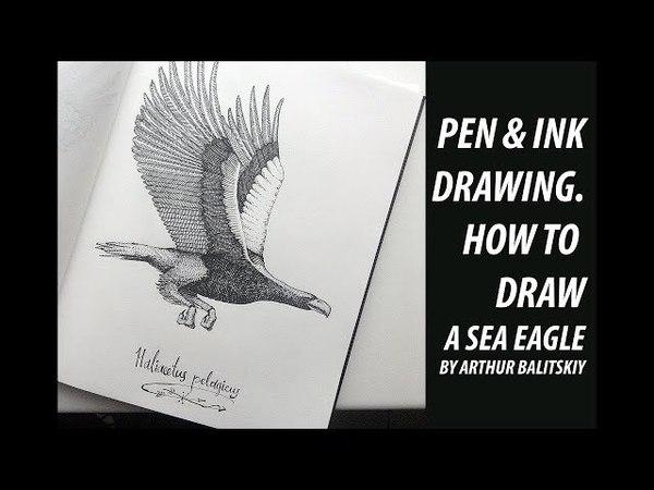 Рисунок Белоплечего орлана, точки и штриховка.