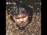 Повелитель пчел