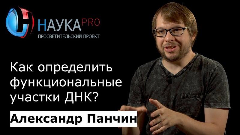 Александр Панчин Как определить функциональные участки ДНК