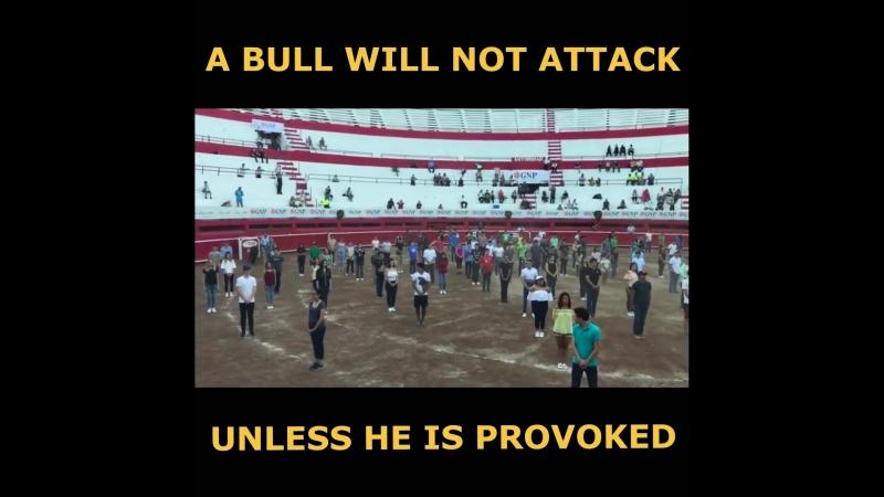 Как правило быки не будут атаковать если их не спровоцировать смотреть онлайн без регистрации