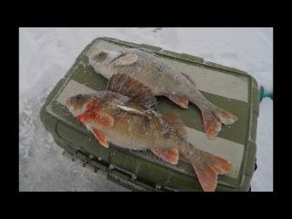Ловля окуня зимой на озере Ильмень. Чертицкий залив.