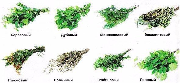 Полезные свойства веников