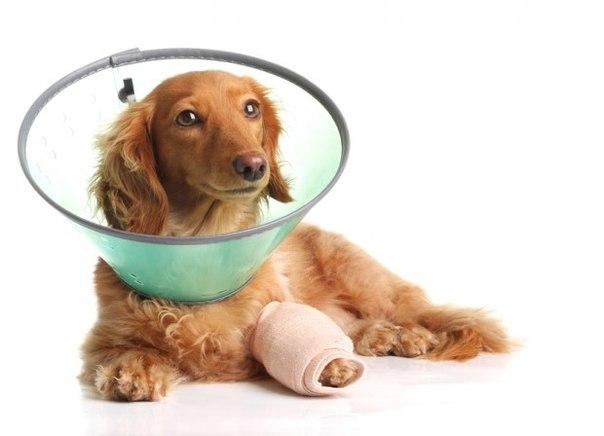 Если собака порезала лапу UiEJ86nJ6sI