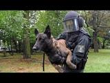 Polizeihunde in der Ausbildung - Nur die besten kommen weiter! - (DOKUMENTATION 2016 HD NEU)