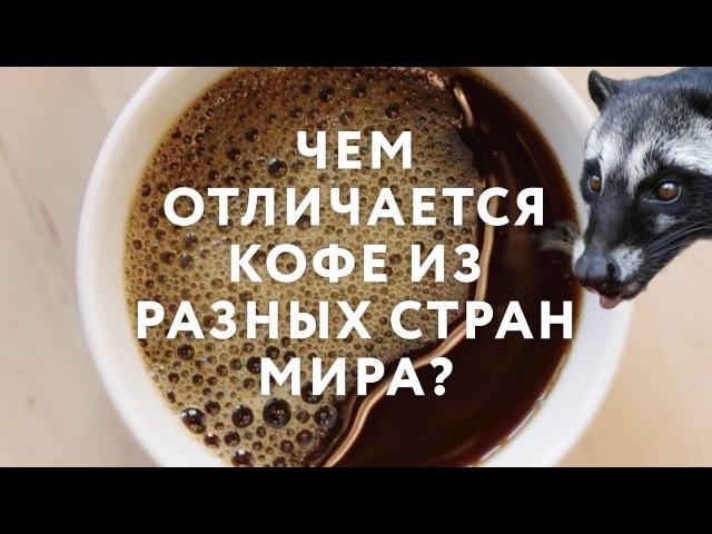 Чем отличается кофе из разных стран мира