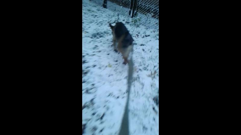 Первый снег Мирры