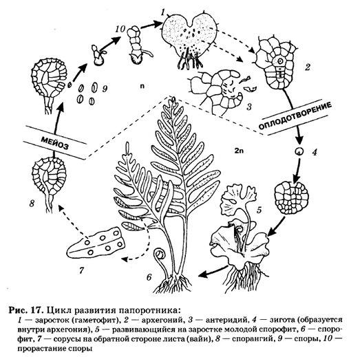 поколений растений (чтобы