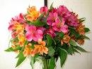альстрёмерия, букет, цветок, природа, Цветы широкоформатные обои на рабочий стол.
