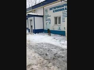 Ветклиника ООО ,,Ветеринар