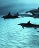"""🌴 ПУТЕШЕСТВИЯ on Instagram: """"Дельфины, Гавайи.⠀ .⠀ Гавайи— самый большой, но весьма малонаселённый остров архипелага. Основные города, которые пос..."""