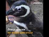 Когда твой друг – пингвин