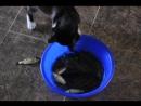 Багирыч ловит рыбу из тазика
