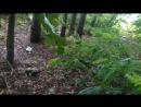 ШОК логово диких бродячих собак(тизер)