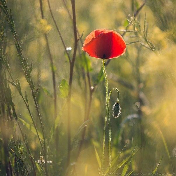 Изумрудное лето... Фотограф Даниил Коржонов