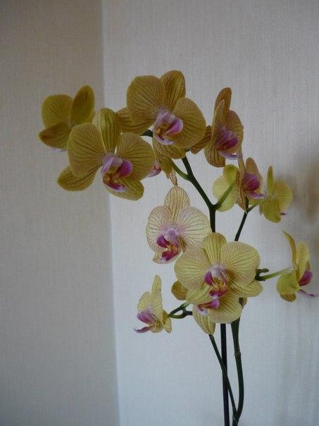 Орхидеи на моём окне!
