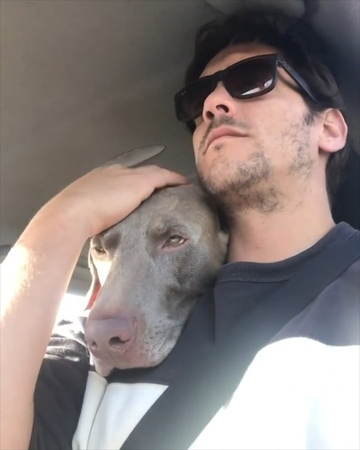 "Barked by 9GAG on Instagram: ""The goodest co-driver - 📹 @podarroz_weimaraner - barked doggo Weimaraner"""