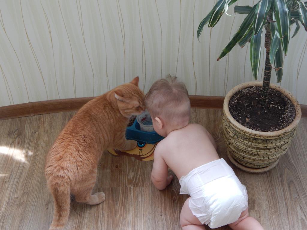 Если ребенок ест из миски кота, то чьи это проблемы? Правильно, кота)