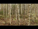 Вот по такому лесочку я дружно с фотиком гуляла и грибочки собирала