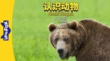 Meet the Animals 5 Grizzly Bear (