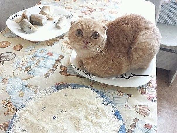 Типичный кот - Страница 3 WjHjTNmA3xs