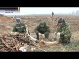 Под Могилёвом обнаружили обломки советского самолёта, подбитого в 1943 году