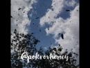 Роение пчёл 🐝 ПокровскийМёд